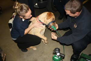 EMTs  demonstrate how the animal oxygen mask would be used on a canine.